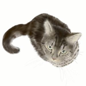 絵画 モダン アートパネル アート インテリア 雑貨 おしゃれ ロココロ 猫 ネコ ねこ 動物 アニマル 画家 : rune 作品 : ぼくとあそんで|obeolysco