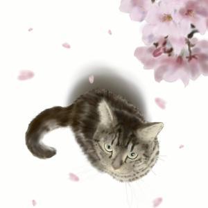 絵画 モダン アートパネル アート インテリア 雑貨 おしゃれ ロココロ 猫 ネコ ねこ 動物 アニマル 画家 : rune 作品 : 桜と猫|obeolysco