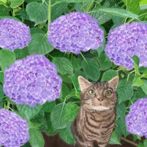 絵画 モダン アートパネル アート インテリア 雑貨 おしゃれ ロココロ 猫 ネコ ねこ 動物 アニマル 画家 : rune 作品 : 紫陽花の下で|obeolysco