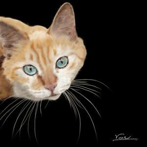絵画 モダン アートパネル アート インテリア 雑貨 おしゃれ ロココロ 猫 ネコ ねこ 動物 アニマル 画家 : rune 作品 : 見つめる猫|obeolysco