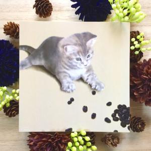 絵画 モダン アートパネル アート インテリア 雑貨 おしゃれ ロココロ 猫 ネコ ねこ 動物 アニマル 画家 : rune 作品 : コーヒー豆と猫|obeolysco