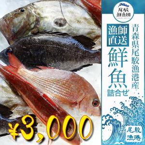 朝獲れ 鮮魚 セット 青森 尾駮漁港 3000円 贈り物 お歳暮 魚詰合せ|obuchisengyodan