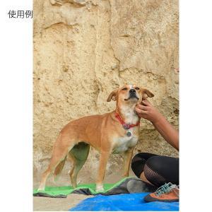 RUFFWEAR ラフウェア RW.ノット カラー/RDCRT/36-51 1874441 レッド リード ペット用品 生き物 犬用品 首輪 ハーネス リード・ハーネス|od-yamakei|04
