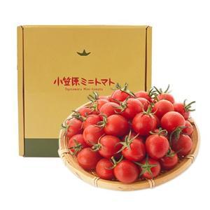 小笠原ミニトマト 850g|ogasawara-market|02