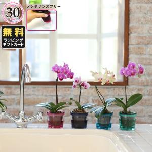 2週間に一度の給水でOK!水やりのテマをはぶいてお花を育てられる、タンブラー入りの胡蝶蘭。オリジナル...