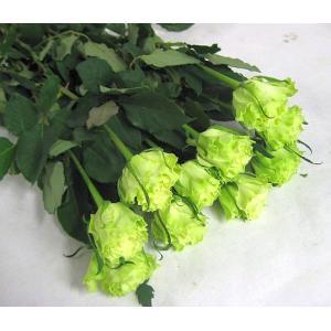 切り花 生花 切花 バラグリーン ライム Gなど5本|ohanakakumei