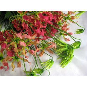 切り花 生花 切花 グロリオサ ミサトレッドなど5本 ohanakakumei