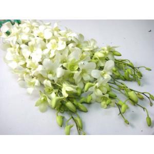 切り花 生花 切花 デンファレ白ビッグホワイトなど5本|ohanakakumei
