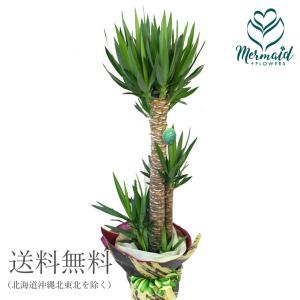 花 鉢物 ギフト 「ユッカ」観葉植物  開店祝い|ohanakakumei