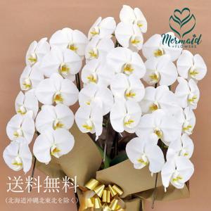 花 お祝い ギフト 胡蝶蘭鉢 コチョウラン  鉢 白 ホワイト  3本立ち 27輪以上 開店祝い 誕生日|ohanakakumei
