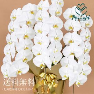花 お祝い ギフト産直 胡蝶蘭 コチョウラン  3本立ち 33輪以上 鉢植え 開店祝い 誕生日|ohanakakumei