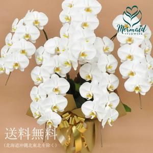 花 お祝い ギフト 産直 胡蝶蘭 5本立ち 45輪以上 鉢植え 開店祝い 誕生日|ohanakakumei