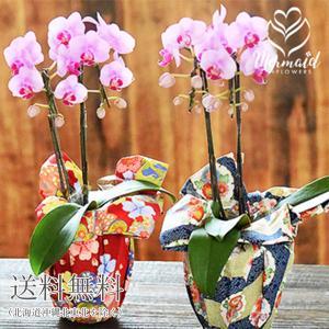 花 ギフト 胡蝶蘭 誕生日 プレゼント 成人祝い 鉢物 おまかせ小風呂敷&テーブル胡蝶蘭(コチョウラン)ピンク2本立ち|ohanakakumei