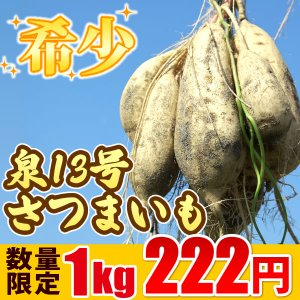 泉13号さつまいも 国産(静岡) サツマイモのセット|oimoya