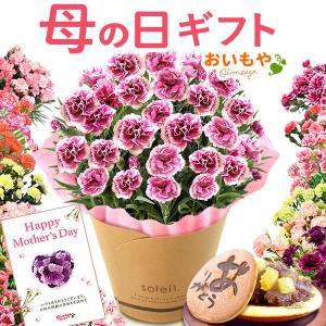母の日 2021 プレゼント ギフト 花 母の日 ギフト プレゼント カーネーション 鉢植え 花鉢 お菓子 スイーツ ギフトランキング 5号鉢の画像