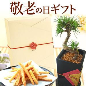 敬老の日 プレゼント  お菓子  松 盆栽  贈り物 花とスイーツ|oimoya