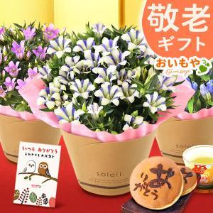 敬老の日 プレゼント 鉢花 ギフト りんどう 花 敬老の日ギフト|oimoya