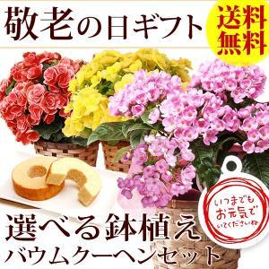 敬老の日 プレゼント 花 お菓子 鉢花 スイーツ|oimoya