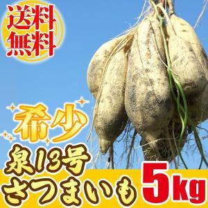 泉13号さつまいも 国産(静岡) サツマイモ 5kg|oimoya