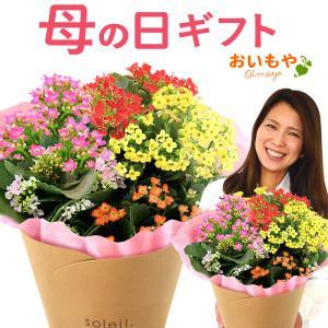 母の日 花 ギフト 母の日プレゼント 2019 mothersday 鉢植え スイーツ カーネーション以外 oimoya