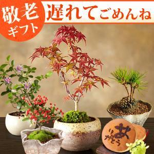 敬老の日 プレゼント ギフト 花 敬老の日ギフト 盆栽 和菓子セット|oimoya