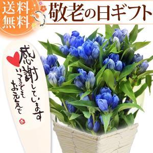 敬老の日 プレゼント 鉢植え 花 スイーツ ギフト りんどう 2019 ギフト oimoya