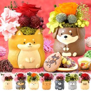 誕生日プレゼント 2021 お祝い お菓子 和菓子 セット 孫 ギフト 犬 花 花とスイーツ プリザーブドフラワー スイーツ oimoya