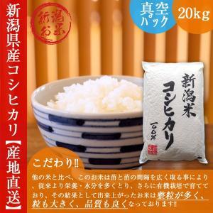 新潟 コシヒカリ 20kg 真空パック 長期保存 新米 白米 令和2年産 送料無料 5kgx4袋 おすすめ|oishii-kome
