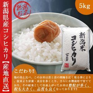 新潟コシヒカリ5kg   29年度新米コシヒカリ 白米 こし...