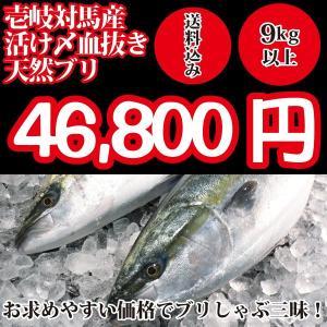 (送料無料)壱岐対馬産 天然寒ブリ9kg以上(活け〆血抜き神経抜き)