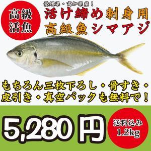 美味しい魚ドットネットの活け締めシマアジはご注文を頂いてから生きたシマアジを活け締めにして ご要望な...