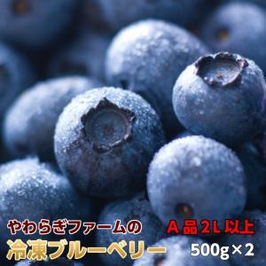 ブルーベリー 茨城県 やわらぎファーム 冷凍 ブルーベリー1kg 500g×2  茨城県 小美玉 産地直送 ギフト 食物繊維 抗酸化作用
