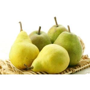 果物の女王 山形県産 「ラ・フランス」2人で1個食べきり3L...