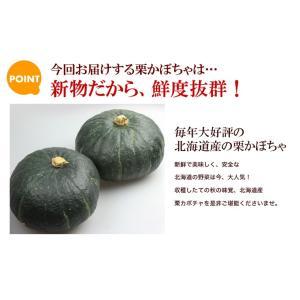 栗かぼちゃ 「くり将軍」 北海道産 カボチャ(10kg/約4〜7玉) 産地直送 送料無料|okadanouen|05