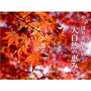 栗かぼちゃ 「くり将軍」 北海道産 カボチャ(10kg/約4〜7玉) 産地直送 送料無料|okadanouen|06