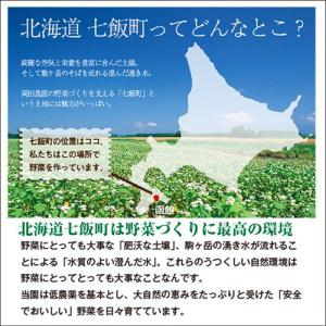 とうもろこしゴールドラッシュ 北海道産トウモロコシ朝採れ直送(L〜2Lサイズ×20本セット)|okadanouen|04