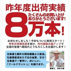 とうもろこしゴールドラッシュ 北海道産トウモロコシ朝採れ直送(L〜2Lサイズ×20本セット)|okadanouen|05