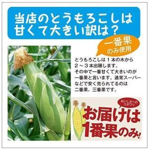 とうもろこしゴールドラッシュ 北海道産トウモロコシ朝採れ直送(L〜2Lサイズ×20本セット)|okadanouen|06