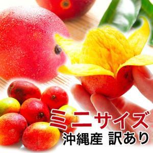 沖縄産ミニマンゴー500g前後(3〜10個入り)(訳あり)...