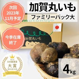 加賀のまる芋ファミリーパック大 レシピ付き|okamotonojostore