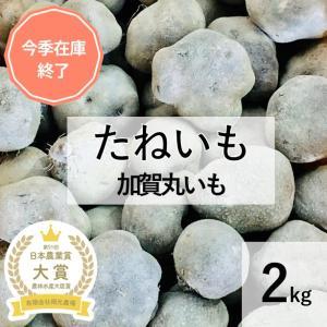 加賀丸いも 家庭用 たねいも 2キロ 丸いも生産農家 |okamotonojostore
