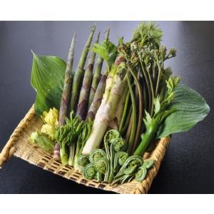 天然 山菜 山菜天ぷらセット500g 天ぷらが美味しい 春の味覚 山の幸 5,6種類を採りたて産地直送 天ぷらパーテイで食べ較べ|okuaizushunsaikan-y