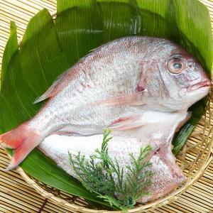 真鯛一夜干し 5パック詰合せ|okunoto-hamano