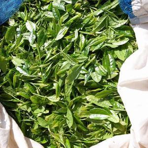 おもてなしギフト 掛川茶 静岡県掛川市の中根製茶がお届けする 掛川茶1缶と玉露1缶 桐箱入|omotenashigift|06