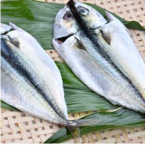 おもてなしギフト 三崎の干物 三浦半島の三崎 うらりのさざえやがお届けする季節の干物|omotenashigift|05