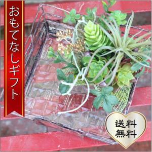 おもてなしギフト ガラス器と多肉アレンジ ガラス作家手作りの器にグリーンアレンジ いやしの空間を!|omotenashigift