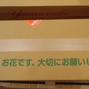 おもてなしギフト お祝いのユリ 「山崎スマイルリリー」(A) ユリ農家の山崎農園が厳選したユリをお届け 受け取った方の笑顔を引き出すユリです|omotenashigift|06