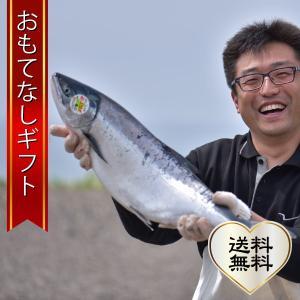 おもてなしギフト 北海道 釧路町昆布森沖 定置網の秋鮭(銀毛...
