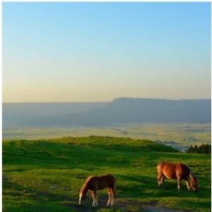 おもてなしギフト 純粋馬油 北海道岩見沢のグレースおかがお届けする古来から伝承された製法を用いた純粋馬油 大地のクリスタル|omotenashigift|04