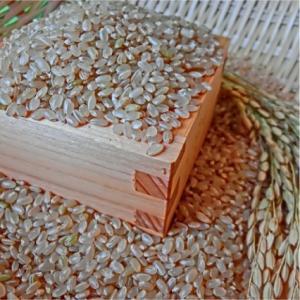 おもてなしギフト ササニシキ 登米産のお米にこだわるマキ米穀店の宮城県産登米のササニシキの玄米|omotenashigift|04